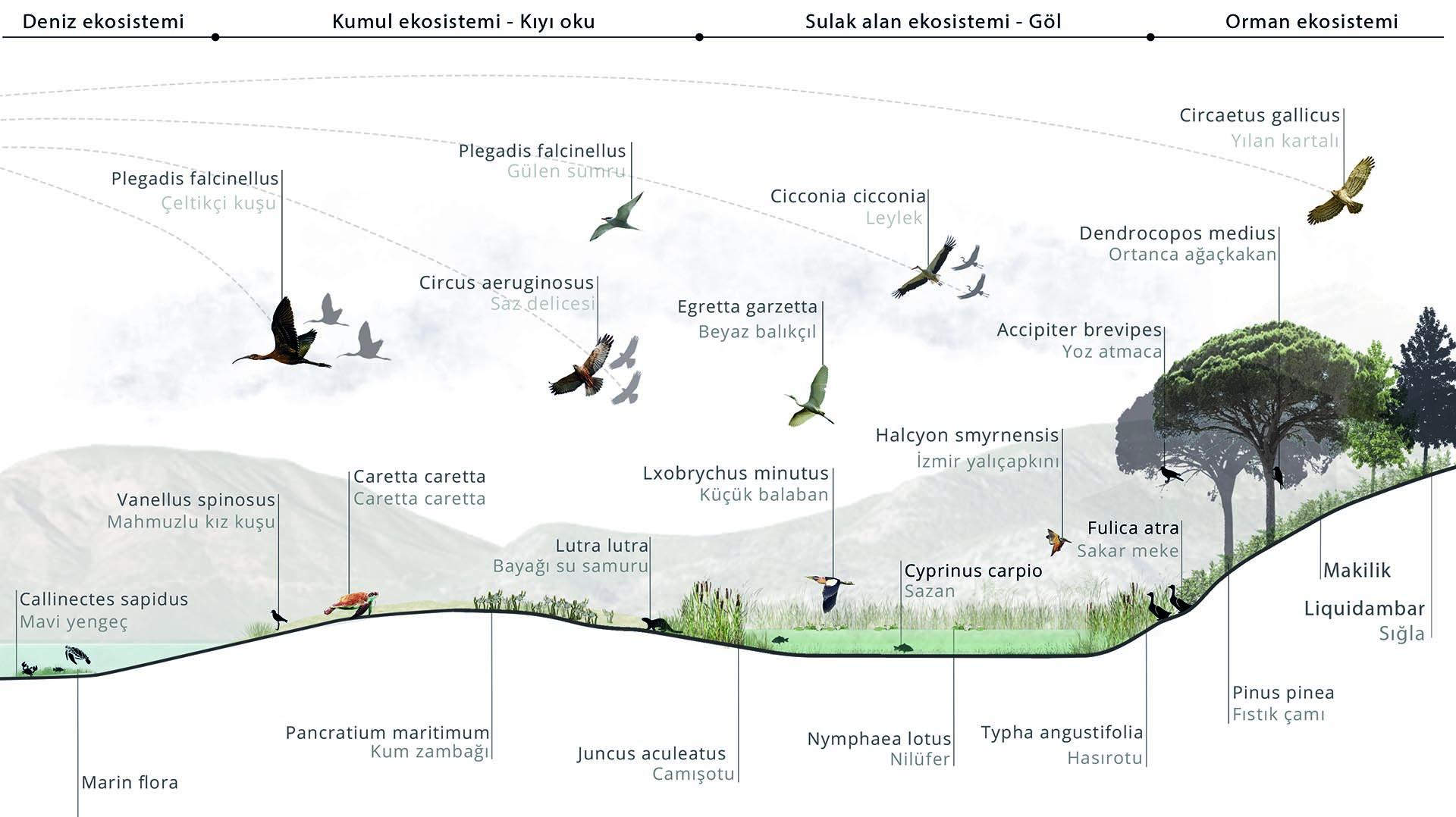 Ekolojik Kesit